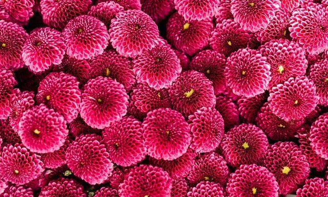 kwiaty z okazji Dnia Kobiet